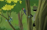 Woodpecker.wk.05