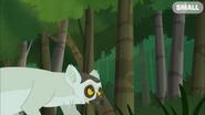 Alpha Female Lemur