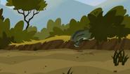 Croc.00237