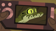 Croc.00264