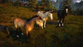 Domesticated horses near Novigrad