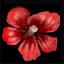 Květ dvouzubce