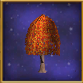 Small Maple Tree