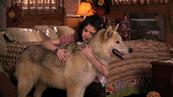 AlexMason-dog