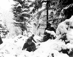 American infantry of 290th Regiment take cover in trees, Belgium 1945