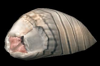 Maggot