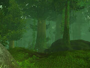 High Wilderness
