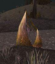Bogbean Plant