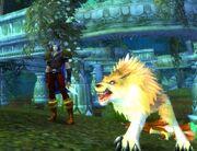 Xaxas companion