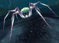 Spindleweb Spider