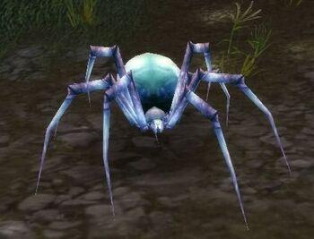 Pygmy Venom Web Spider