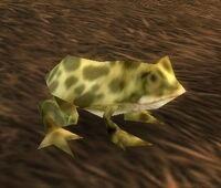 Giant Marsh Frog