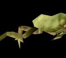 Tree Frog Box