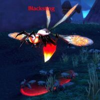 Blacksting