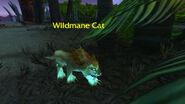 (Echo Isles) Wildmane Cat