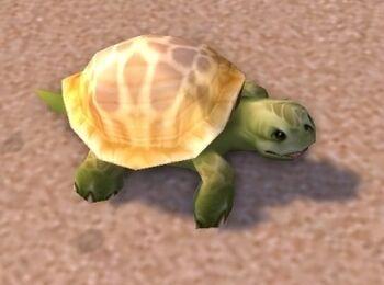 Image of Emerald Turtle