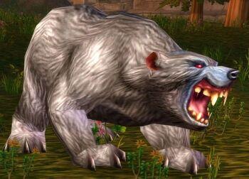 Elder Gray Bear
