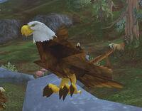 Imperial Eagle