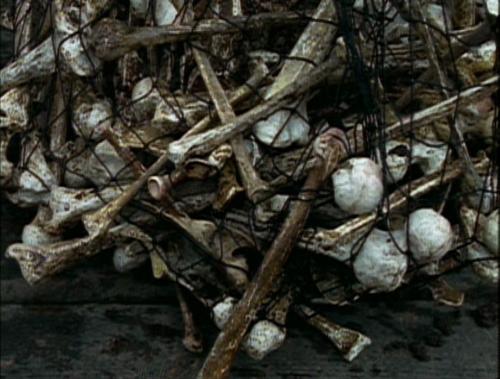File:Discovered bones.png