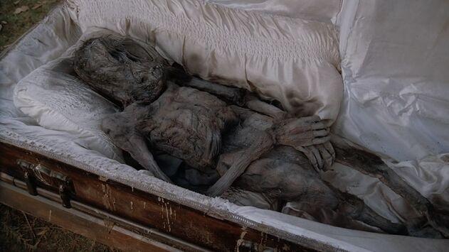 File:Mammalian corpse.jpg