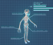 XComEU Sectoid anatomy