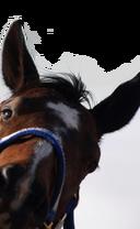 Horse-corner