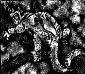 ChameleonColors-EN-Manga-R-CA