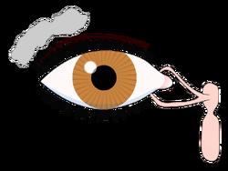 800px-Tear system svg