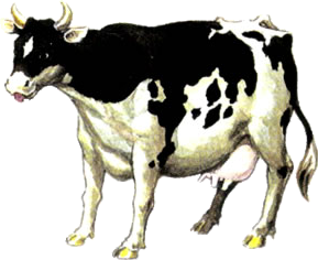 File:Cow Artwork (Ocarina of Time).png