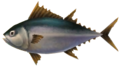 Majora's Mask 3D Fish Nuptuna (Ocean Fishing Hole).png