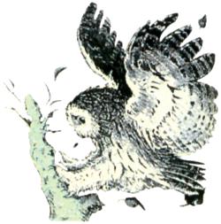 File:Owl Artwork 3 (Link's Awakening).png