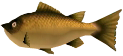 File:Majora's Mask 3D Fish Termina Bass (Swamp Fishing Hole).png