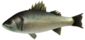 Majora's Mask 3D Fish Termina Seabass (Ocean Fishing Hole).png