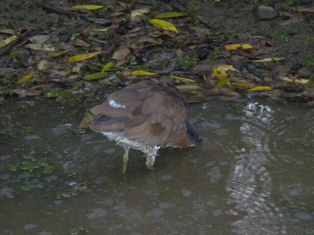 檔案:Bird in park.JPG