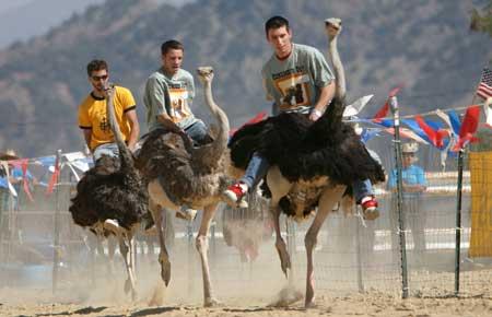 File:Ostrich-race.jpg