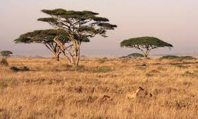 File:Savana.jpg