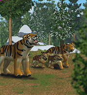 ZT1 - Siberian Tiger