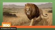 Barbary lion artwork