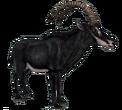 Sableantelope