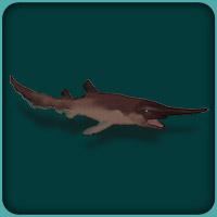 Goblin Shark2