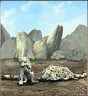 Snow Leopard ZT