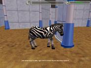 Official Zebra Variant