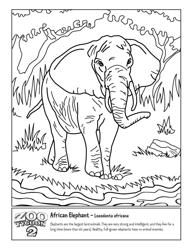 Forest Elephant Drawing African Elephant The Zoo