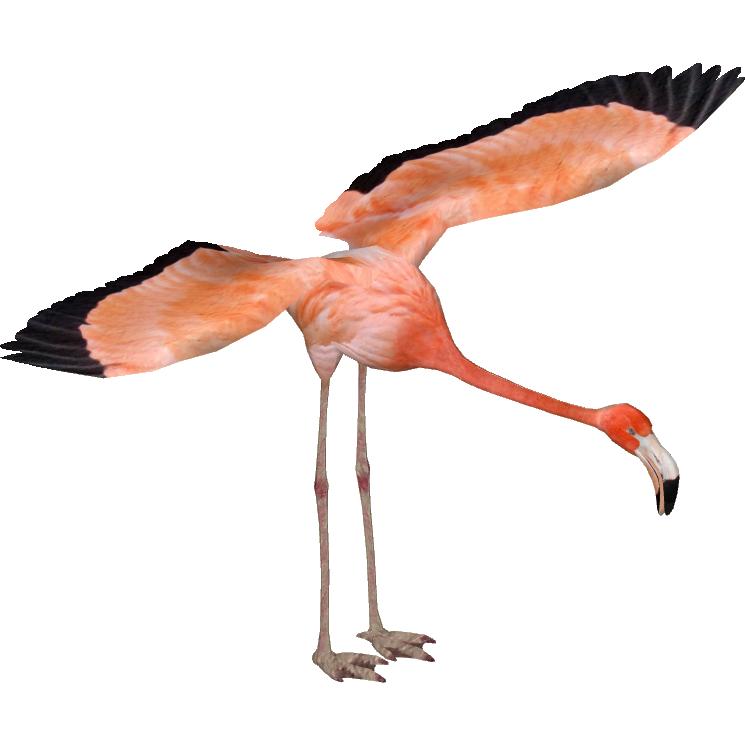 Caribbean Flamingo Masterchief123 Zt2 Download Library