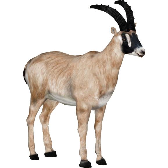 Sennar Roan Antelope Tamara Henson Zt2 Download