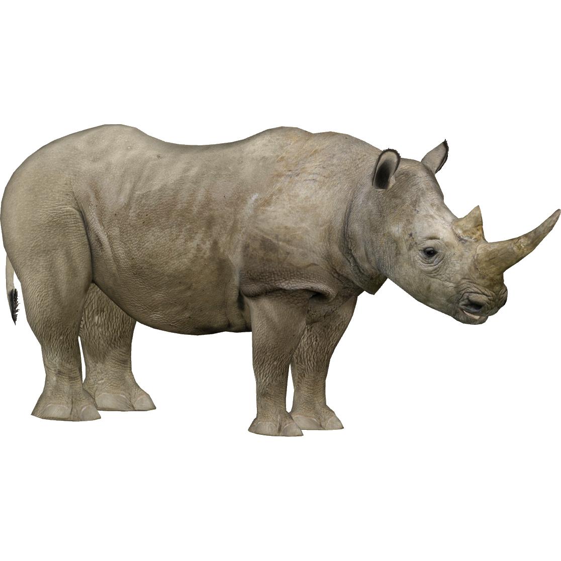 Northern White Rhinoceros Zerosvalmont Zt2 Download