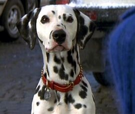DalmatianLiveAction