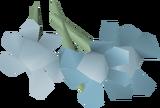 Trollweiss detail