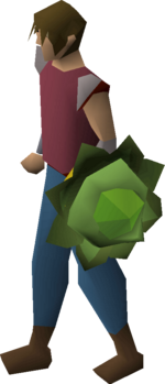 Cabbage round shield equipped
