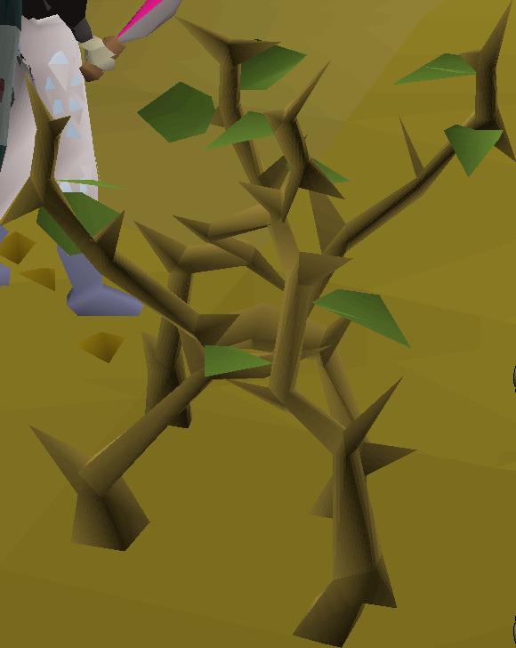 Medium jungle